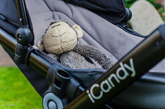 Snug As A Bug!! (BGDL) Tags: matty onthemove pram softtoy week5 babybuggy icandy niftyfifty 7daysofshooting nikond7000 bgdl afsnikkor50mm118g lightroomcc contrastthursday