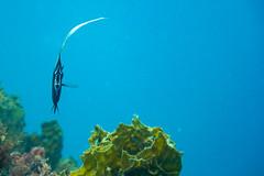20150802-DSC_4020.jpg (d3_plus) Tags: sea sky fish beach japan scenery underwater diving snorkeling  shizuoka    apnea izu j4  waterproofcase    skindiving minamiizu       nikon1 hirizo  1030mm  nakagi 1  nikon1j4 1nikkorvr1030mmf3556pdzoom beachhirizo misakafishingport  1030mmpd nikonwpn3 wpn3