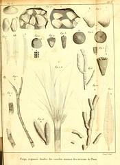 n452_w1150 (BioDivLibrary) Tags: france fossil paleontology geology parisregion smithsonianlibraries mammalsfossil vertebratesfossil bhl:page=41588134 dc:identifier=httpbiodiversitylibraryorgpage41588134