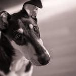 Lotta-koira thumbnail