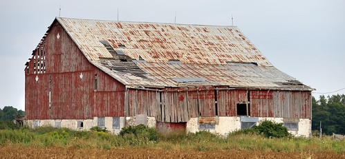 Decrepit Old Barn With Rusty Metal Roof   Caledon, Ontario
