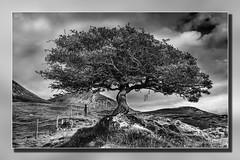 Skye Tree Mono
