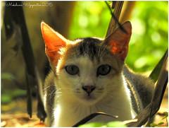 DSCN0941 (mokshi777) Tags: urban srilanka biodiversity rambukkana nikonp900 meedumawaluwa