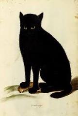 Ulisse Aldrovandi (1522 - 1605) Gatto nero. disegno acquarellato. /// Immagine di http://38.media.tumblr.com/4e358c54188475d1774d24b379ecf650/tumblr_mf9beul1hz1ra1sh2o2_1280.jpg. (mariamignosa65) Tags: gattonero ulissealdrovandi mariamignosa disegnoacquarellato