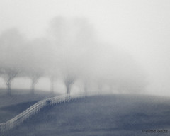Quiet... (vilmaca) Tags: trees mist painterly fog fence outdoor icm whitefence intentionalcameramovement