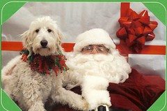 ginger-age-2--lilly-and-tobys-puppy-enjoyed-sitting-on-santas-lap-this-year--she-asked-for-lots-of-bones-and-lots-of-walks-in-2009_3115565651_o