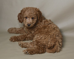 molly-is-one-of-honeys-puppies_13253933285_o