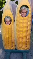 Children Of The Corn (Joe Shlabotnik) Tags: galaxys5 syracuse statefair violet 2016 corn newyorkstatefair cameraphone everett september2016 faved