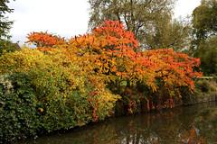 Autumn foliage, Elbow Cottage, nr Avoncliff (Carneddau) Tags: type bradfordonavonmidforddundasloop kennetavoncanal nrelbowcottage tree turleigh england unitedkingdom