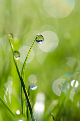 Morning Dew (MarkAndersonNikon) Tags: waterdrop morning sunrise grass macro micro nikon d7000 40mm bokeh