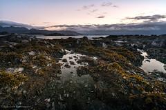 Jewel Beach (rishaisomphotography) Tags: alaska kodiak uscg jewelbeach longexposure landscape nature naturephotographer beach shore tidepools rocks seaweed sea ocean water texture