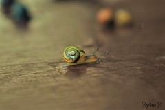 'edge'  away...HMM! (martinap.1) Tags: edge macro mondays schnecke snail nikon d3300 1855mm makro close up nature natur