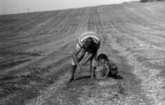 exakta_vx_kodak_tmax_100_pushed_hc110_picking_groundnuts (avitalnatanson) Tags: exakta kodak tmax push hc110 picking groundnuts field blackwhite film