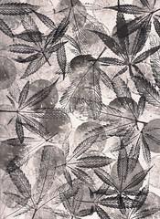 Lemon Skunk - 2016 (Jurassic Blueberries) Tags: greensboro henderson buffalo chulavista orlando norfolk chandler laredo madison durham lubbock winston salem garland glendale hialeah reno batonrouge irvine chesapeake irving scottsdale fremont sanbernardino boise idaho birmingham alabama manhattan eugene nba nfl mlb mls usaf uscg medford ncaa cannabis vape art artist abstract grow marijuana flickr apple starbucks nike google bing tumblr wordpress intel microsoft iphone color space iss moon rainbow love sexy pdx stumbleupon readdit digg xerox dispensary medical comet new