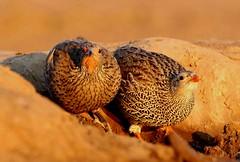 Botswana (ClaDae) Tags: boswana africa birds hide evening wildlife wild animal