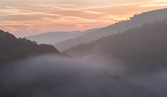 Mist Tinged Teign (macdad1948) Tags: wood dartmoor mist millend teign castledrogo trees okehampton water fog chagford devon river stream forrest woods hunterspath finglebridge nationaltrust