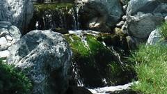 Elegance (adventurekyles) Tags: sandiego balboapark museumofman history landmarks museums art culture architecture naure stream creek river flow flowing water algae nature waterfall