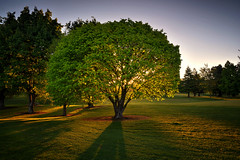The Soul Exposed (Kevin_Jeffries) Tags: light lighting sunlight evening new shadows shade leaves grass heavenly nikon nikkor 1685mm d7100 november newzealand treeoflife kevinjeffries prolific spring park transparency soul flickrtoday dusk sunshine sunbathing landscape green