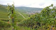 Rotenberg Weingrtle (eagle1effi) Tags: trauben rotenberg weinlese s7 stuttgart