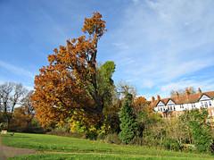 Hampstead Heath in autumn (Dun.can) Tags: hampsteadheath london nw3 hampstead autumn trees parliamenthill brookfieldmansions