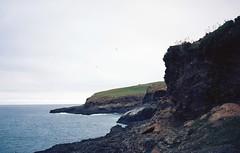 Royal Albatross Centre (denise yeap) Tags: 135 newzealand nz analog analogue film filmnotdead filmneverdie kodak ektar100 colours travel roadtrip albatross seaseal dunedin canterbury seaside southisland