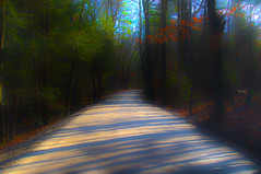 Quiet country road (macnetdaemon) Tags: outdoor outside nature road tree plant light sunbeams beautiful intriguing surreal abstract shadow