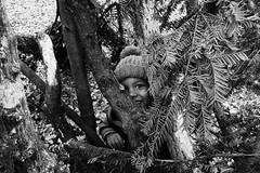 Tree peeper (Mr Richie) Tags: panasonic lumix lx5 digital dadsgroup fathers nature streatham common lodge monochrome blackandwhite bw filmgrain