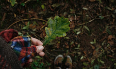 Details. (Louise Lemettais) Tags: chne tree feuille automne green fun macro delire trip travel world foot feet hand fingers me myself canon woods lost alone love nature natural extrieur