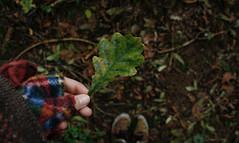 Details. (Louise Lemettais) Tags: chêne tree feuille automne green fun macro delire trip travel world foot feet hand fingers me myself canon woods lost alone love nature natural extérieur