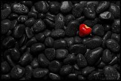 Fallen on stony ground (WibbleFishBanana) Tags: strawberry stones pebbles rocks wet erbeere