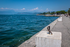 "Lazise 2016 • <a style=""font-size:0.8em;"" href=""http://www.flickr.com/photos/58574596@N06/30853250941/"" target=""_blank"">View on Flickr</a>"