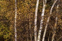 RSPB Sandy-4 (Malcolm_Graham) Tags: autumn colours autumncolours sandy thelodge