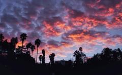 Sunset over Silverlake, Los Angeles (mayhemstudios) Tags: californiasunsets bluehour pinkhour clouds sunsetporn silverlake atwatervillage happeningindtla venicesunsets abc7eyewitness streetmeetla discoverla lastory instagramla losangeles uglagrammers socalshooters igersla conquerla sonyimages sonya6300 laphotographer nightphotography sonyalpha longexposure agameoftones lazyshutters landscape fall