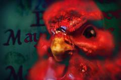 Angry Bird (Paul B0udreau) Tags: macro nikkor50mm18 photoshop canada ontario paulboudreauphotography niagara d5100 nikon nikond5100 raw layer fotodioxextensiontubes flash 7mm14mm bird porcelain figurine scottishtoast