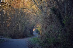 Down the lane (Nige H (Thanks for 7m views)) Tags: nature trees lane linearpark bath landscape winter