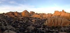 Skull Rock area (Camden S. Bruner) Tags: joshuatree nationalpark riversidecounty ca california