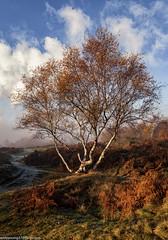Runcorn Hill in Autumn (3 of 10) (andyyoung37) Tags: mist runcorn runcornhill cheshire england unitedkingdom gb