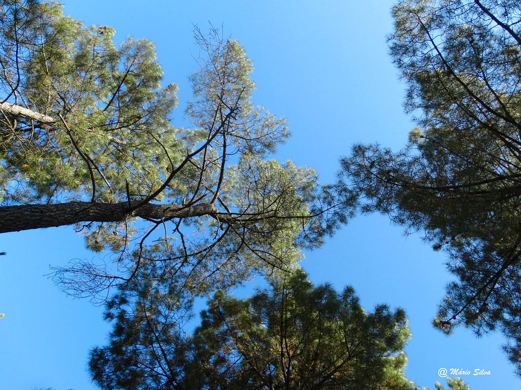 Águas Frias (Chaves)  - ... olhando o céu ...