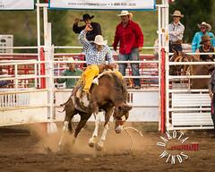 20150815-L59A3841.jpg (kendra kpk) Tags: summer horses southdakota bareback cowboy august bulls rodeo cowgirl bullriding rapidcity sportingevents saddlebronc penningtoncounty barrellracing hartranch dakotawindsphotography kendraperrykoski wwwdakotawindsphotocom2015 hartranchrodeo