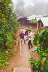 IMG_6230 (athingcalledlife) Tags: blackandwhite india green art nature rain photography colours lush coorg virajpet vsco