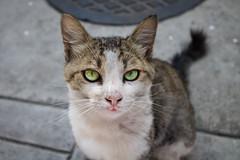(andrearacydop) Tags: street pet cat eyes kitty photowalk felino