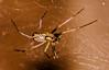 Closeup Spider (Adamc206) Tags: macro closeup garden spider web 8legs