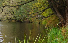 IMGP2953 (PahaKoz) Tags: park autumn nature water leaves forest river landscape riverside branches waterside parkland sedge осень leafage природа лес пейзаж парк река ветки берег листва ветви осока