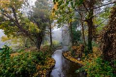 stream (Steve J Cottis) Tags: park trees lake water fog stream dartford tokina1116mm28 brooklandslake nikond5300