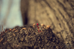 life goes on (Axel Ku.) Tags: autumn 35mm germany bayern deutschland bavaria herbst bud franken würzburg knospe frühlingsboten f20 frankonia unterfranken canonef35mmf20 canoneos5dmarkiii