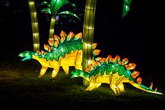 Stegosaurs (Jerry Bowley) Tags: calgary zoo dinosaur lanterns stegosaurus dinosaurs calgaryzoo yyc illuminasia