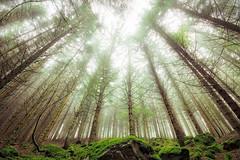 Green view (Bruno MATHIOT) Tags: hdr aurora tonemapping alsace france french up haut sky vert color couleur arbre trees nature outdoor extérieur hiking randonnée forest forêt 10mm 1020mm 760d canon sigma trépied tripod