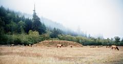 Elk (Dunstan) Tags: 959 film portra bessar 3a voightlnder kodak 400 color 35mm