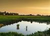 A peacefull paddy field (Azizasrar Photoghraphy) Tags: paddy paddyfiel slowshutter amateurtobepro travellight lake nikon sony sonyshooter landscape azizasrar malaysia kelantan