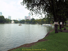 Large Lake in Lumphini Park in 2013, Pathumwan District, Bangkok, Thailand. (samurai2565) Tags: pathumwan hualamphongrailwaystation bangkok thailand railwaysinthailand bangkokrailwaystation erawanshrine chitlom rama1road skytrain policehospital phloenchitroad lumphinipark